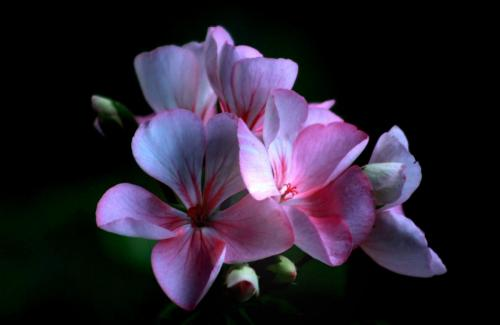 pinkflowerthumb