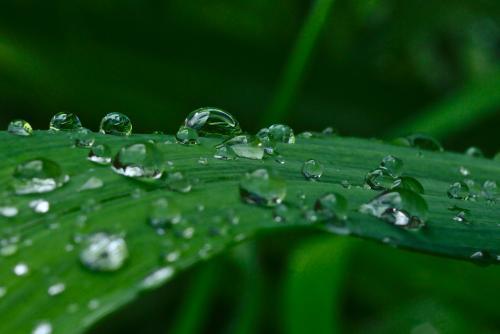 dropsweb